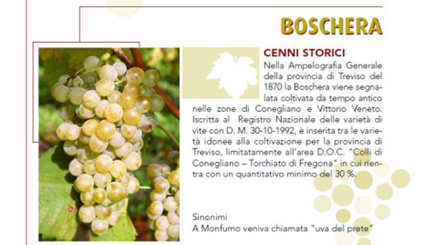 Boschera, vino autoctono da rarissima uva trevigiana salvata da Zanon