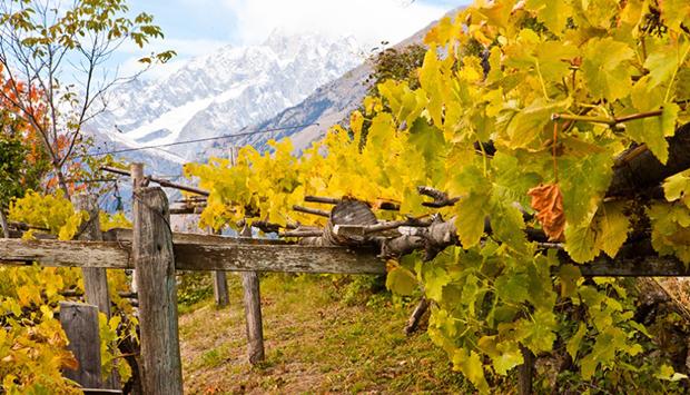 Da Cave Mont Blanc in Valle d'Aosta, spumanti d'alta quota di Prié Blanc