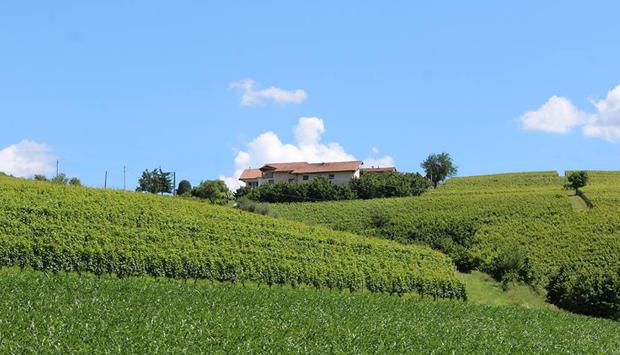 I vini bianchi di Cascina Carlòt: Cortese, Arneis e i Moscati