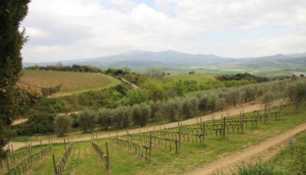 Il Brunello e i vini di Montalcino di Corte dei Venti