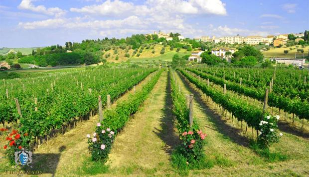 Vignamato della famiglia Ceci, Verdicchio e vini identitari marchigiani