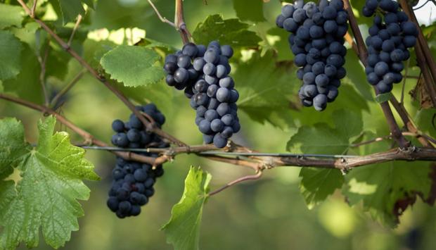 I vini di Brunnenhof Mazzon, Pinot Nero e altre perle dall'Alto Adige