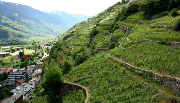 Balgera, lo Sforzato e i vini tipici della Valtellina