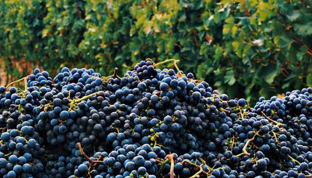 Il Conventino, la casa del Vino Nobile di Montepulciano in terra toscana
