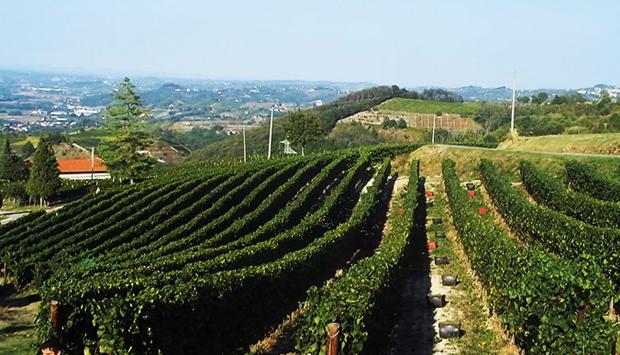 Vini di Moscato della Pianbello, da uve coltivate tra Canelli e Loazzolo