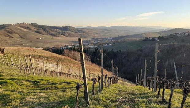 Andrea Picchioni, vini che seguono la vera natura dell'Oltrepò Pavese