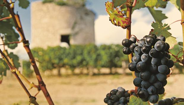 I vini di Feudi Salentini, regno delle uve autoctone pugliesi