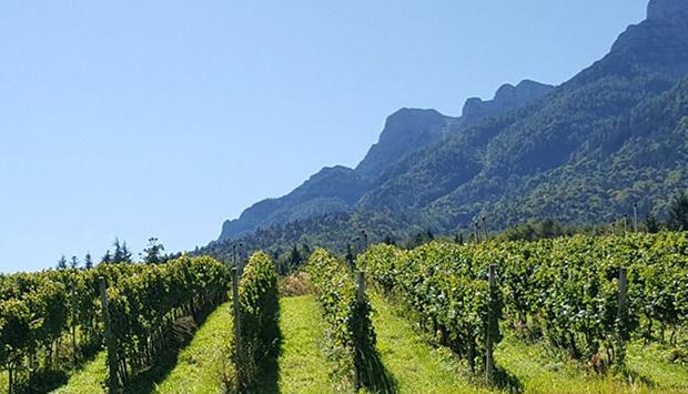 Dalla Cantina Furlani, vini angelici identitari della Collina di Trento