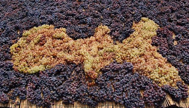 I vini di Mola, da uve autoctone dell'Isola d'Elba vicine al mare