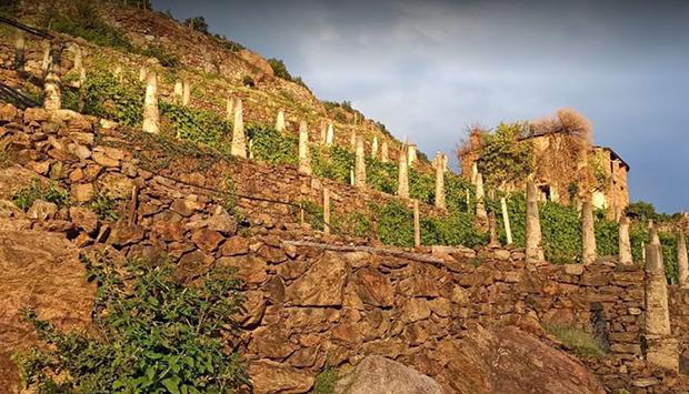 Il Carema di Chiussuma, vino estremo dai terrazzamenti del torinese