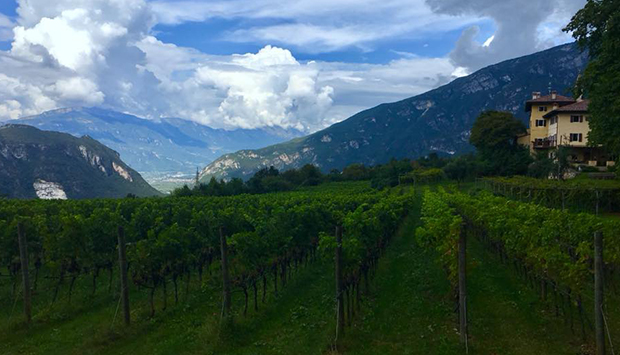 Borgo dei Possèri, il richiamo della natura in vini trentini di montagna