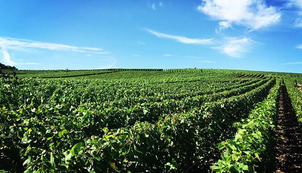 Virginie T., Champagne tra modernità e 160 anni di storia familiare